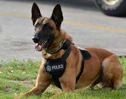 belgian shepherd stuffed animal k 9 green bay police department