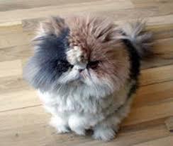 صور قطط تدحك,صور قطط,صور قطط جميلة,صور قطط حلوه Images?q=tbn:ANd9GcRPJMSQW7RTsObBE3qh6J1v4eiAgaBCuKSg2j4z7tIS8Jyz2Cpo