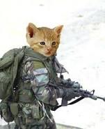 حبايبي القطط Images?q=tbn:ANd9GcRPjcbyqMvdeS3REWv9Wb6s3SFmGU0vl7mmRbMUNrgjxquMFNUxwuBnuP7R