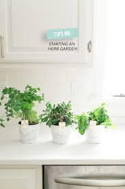 216 best indoor plants images on pinterest plants gardening and