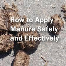 How To Keep Deer Out Of Vegetable Garden by 5 Tips For Using Manures In The Garden Home Grown Fun
