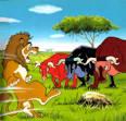 นิทานอีสป เรื่องสิงโตกับวัว - BKKSEEK.COM