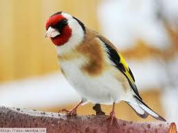 انواع الطيور موضحه بالصور