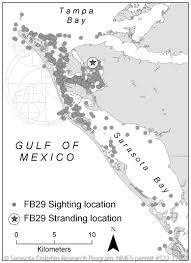 Florida Shark Attack Map by Shark Tracking In Sarasota Bay