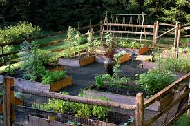 Planning A Raised Bed Vegetable Garden by Vegetable Garden Design Raised Beds Photos On Spectacular Home