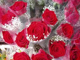 أجمل الورود الحمراء Images?q=tbn:ANd9GcRUvtEHbzRaB4bshMgfqDYSD2LKVF-12fJgbeOm700YssnL_ts9Gkz-prQl-w