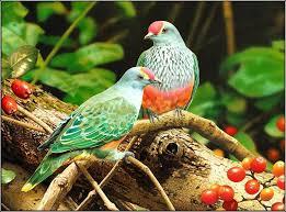 اروع واجمل الطيور العالم
