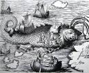 クジラ:鯨の背中のミサ