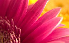 வால்பேப்பர்கள் ( flowers wallpapers ) - Page 3 Images?q=tbn:ANd9GcRWR29FA-kZZm7pIM0T-xeinWYnbGIrQ4L8ZGjsH8Ra3oBTHox9vA