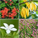 ปลูกดอกไม้มงคลต้อนรับปีใหม่   homedec.in.th บ้านและสวน