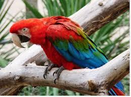 Plumage de perroquets