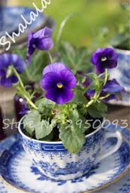 Office Desk Plants by Compare Prices On Mini Potted Plants Online Shopping Buy Low