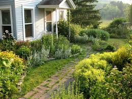 front side yard small house design with various garden plants and