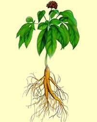 Glosario y propiedades mágicas de las plantas Images?q=tbn:ANd9GcRY6JA1Qo9NxqWCBG_xjlQHIXroZo6KmtgHbTrIw86hKu1_W2VHsA