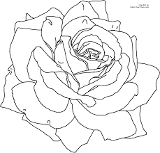 tadpole coloring page realistic flower coloring pages kansas state flower coloring page