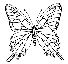 coloring pictures of butterflies