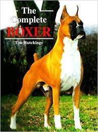 boxer dog uk the complete boxer amazon co uk tim hutchings 9780876051382 books