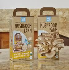 Mushroom Home Decor Amazon Com Back To The Roots Organic Mushroom Farm Amazon Launchpad