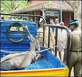 Burro é preso em protesto contra governo na Índia