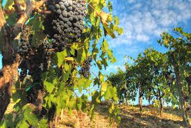 visite giorni del vino