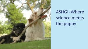 australian shepherd diseases home page australian shepherd health u0026 genetics institute