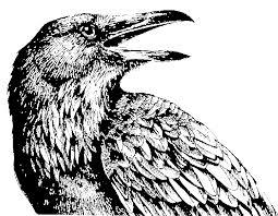whorish ravens