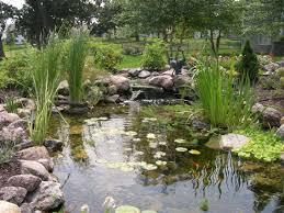 backyard pond myths just add water