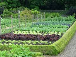 natural ways to get rid of ants in your vegetable garden the