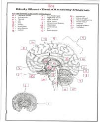 Anatomy And Physiology Chapter 1 Review Answers Stolipher Amy L Human Anatomy U0026 Physiology
