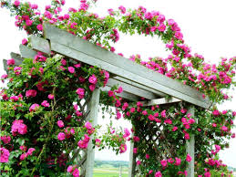 best rose trellis ideas