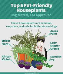 outstanding safe plants for dogs 25 on small home remodel ideas