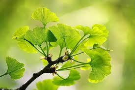 Plantas que melhoram a circulação sanguínea - Lar Natural
