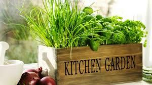 phenomenal indoor herb gardens youtube