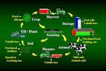 University Park, Pennsylvania : Integrated Farm System Model