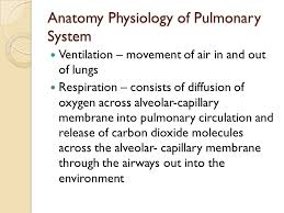Anatomy And Physiology Of Lungs Nursing Management Of Patients With Respiratory Disorders Ppt