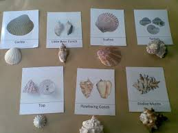 desert crafter sea shells free printable homeschool beach
