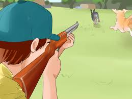 training a bluetick coonhound to hunt how to train a dog for rabbit hunting with pictures wikihow