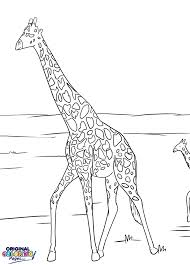 giraffes u2013 coloring pages u2013 original coloring pages