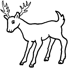 camel coloring pages realistic coloring pages coloring pages of