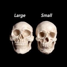 Life Size Skeleton Halloween by Large Life Size 1 1 Resin Human Skull Model Anatomical Medical