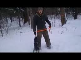 training a bluetick coonhound to hunt training my blue tick coonhound puppy youtube