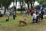 Rally Saint Louis Idea: Dog Park @ Forest Park