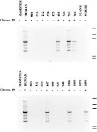 identification and molecular cloning of p75 airm1 a novel member