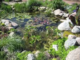download pictures of a pond garden design