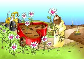 parábola de la semilla y la cizaña