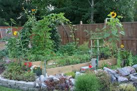 companion vegetable garden layout garden ideas inspiration amy archway vegetable garden layout