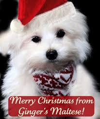 cute christmas dog names christmas dog dog and christmas puppy
