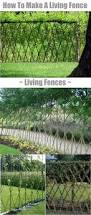 how to feng shui your home for better balance living fence