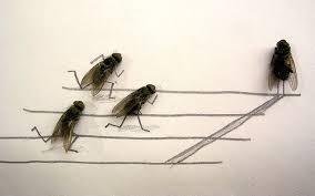 Trik sulap menghidupkan kembali lalat yang mati