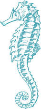 25 best seahorse drawing ideas on pinterest simple animal